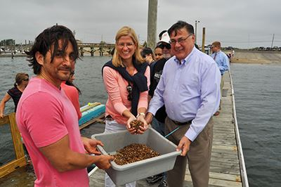 Shellfish Mariculture Program at Cedar Beach Supervisor Romain, Councilwoman Bonner and North Babylo