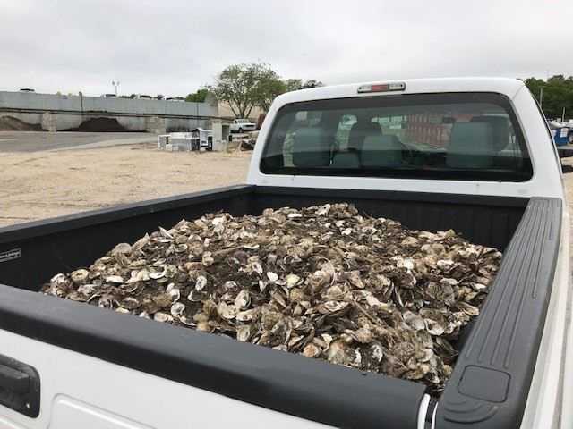 Shells in truck bed