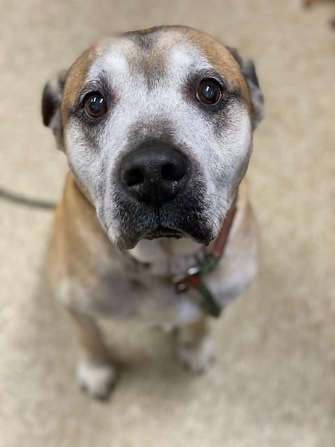 Spanky6094, sweet senior at the shelter available for adoption