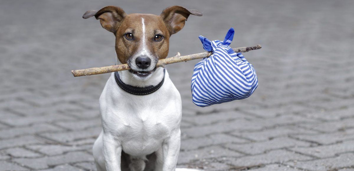 Image of a small dog holding a stick in its mouth