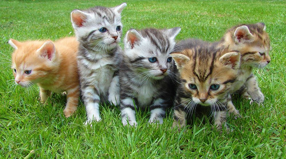 Image of five kittens in the grass