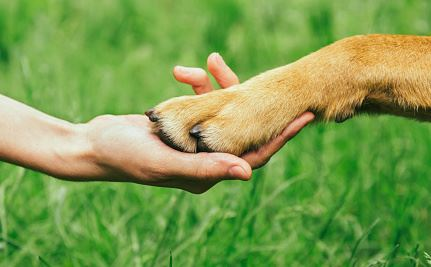 Image of a dog paw being held in human hand